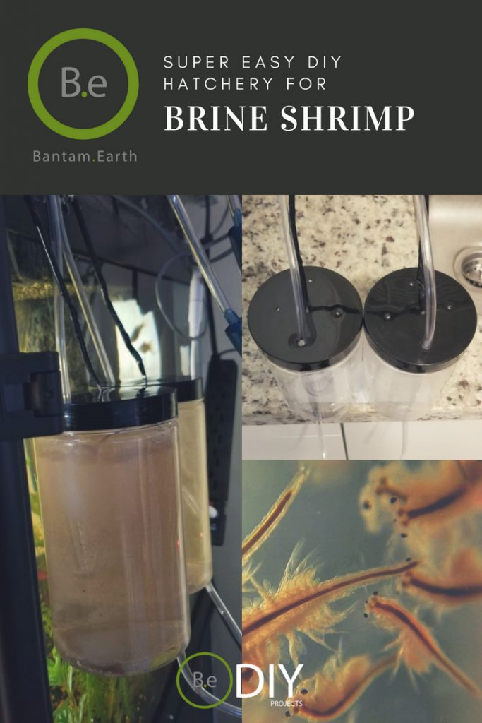 easy diy brine shrimp hatchery