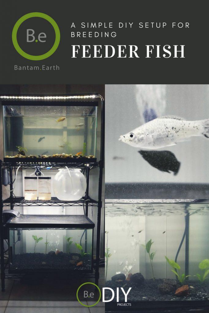 diy feeder fish breeding setup