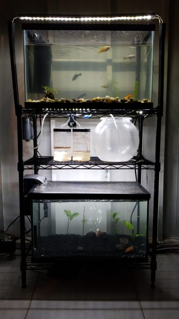 aquaria and brine shrimp hatchery setup LED