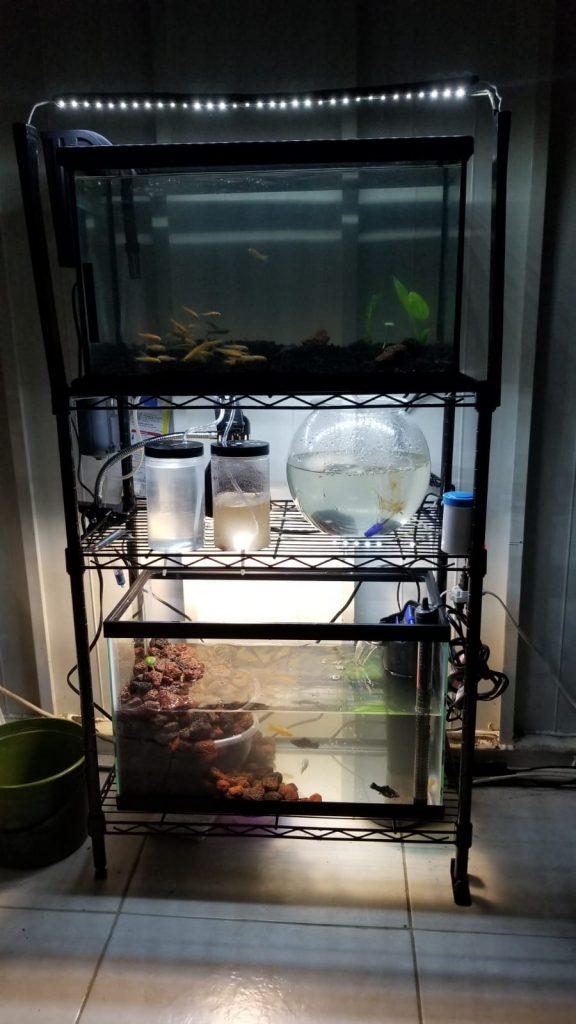 aquaria and brine shrimp hatchery setup