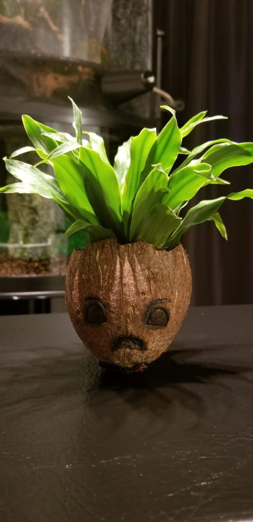 angry diy coconut baby groot planter