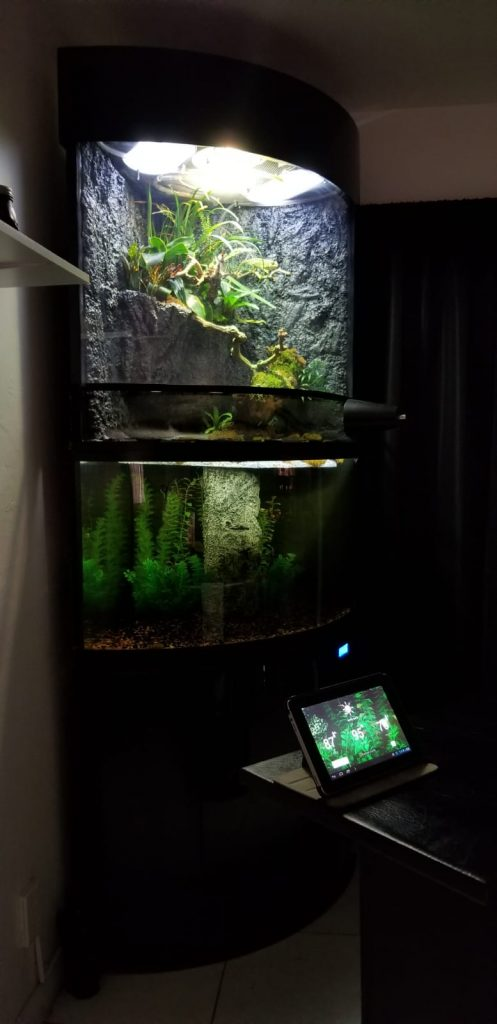 self sustaining terrarium with animals edens bow