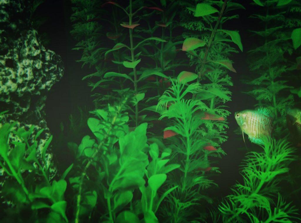artificial plants in paludarium