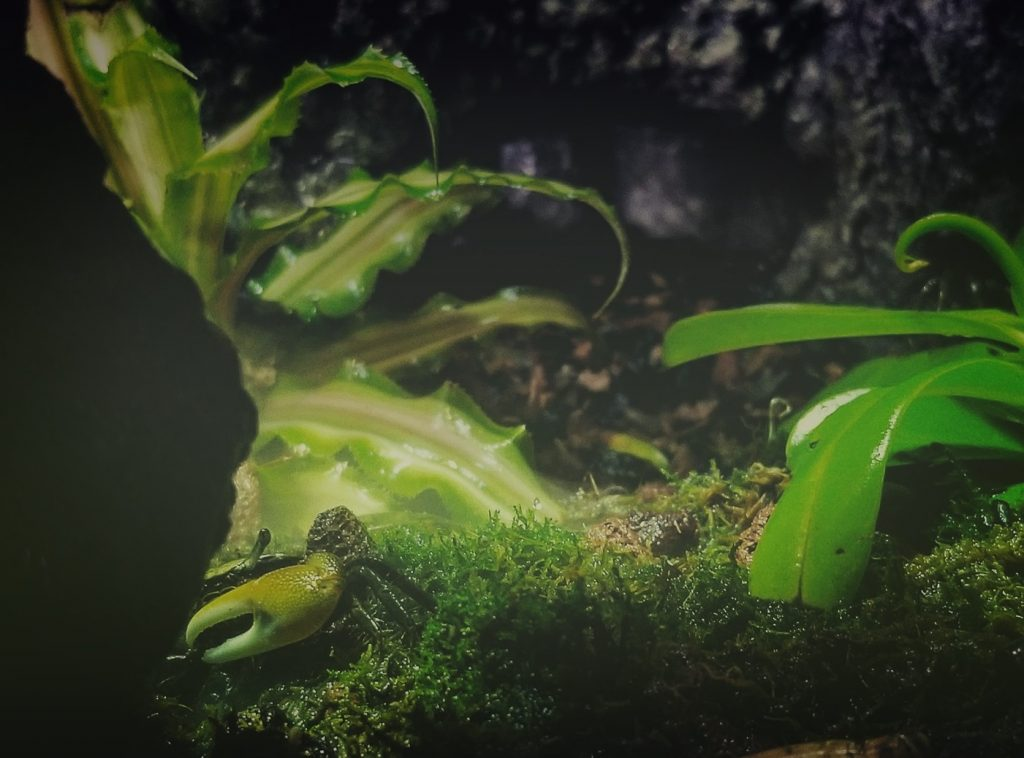 moss and different plants in paludarium