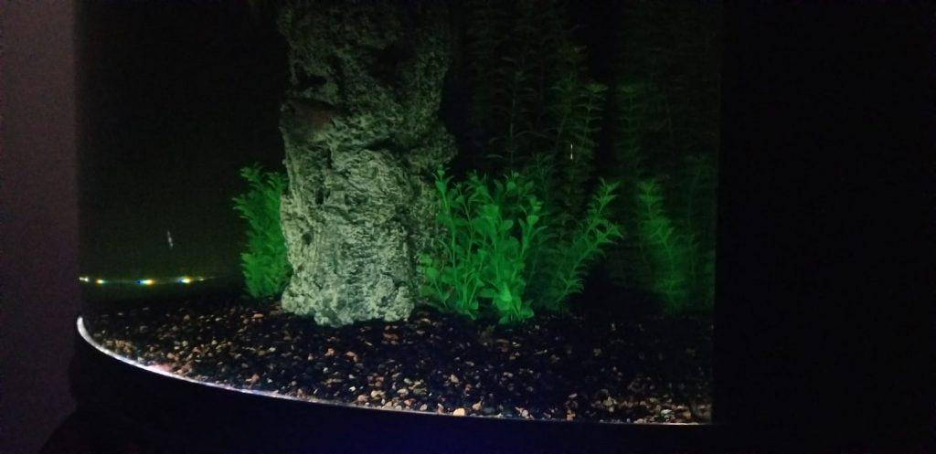 paludarium aquarium portion lights