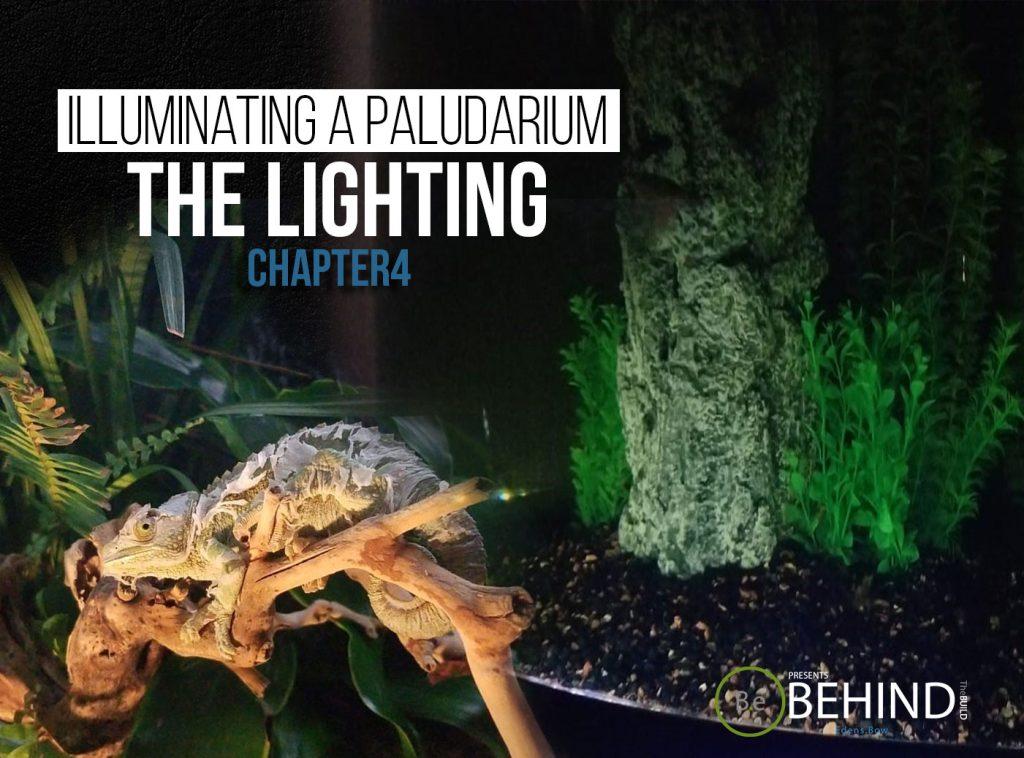 BEHINDtheBUILD chapter 4 illuminating a paludarium