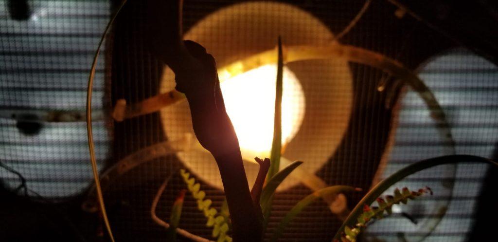 paludarium uvb light
