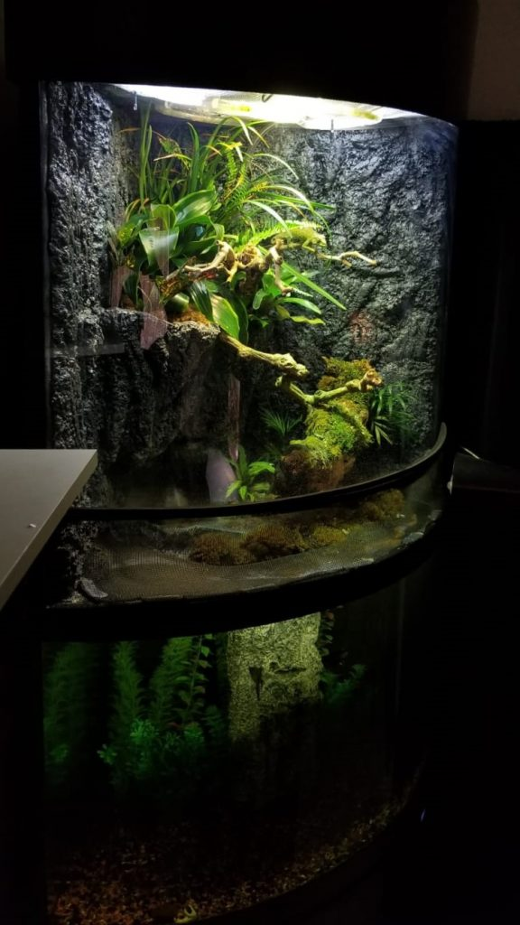 fully planted paludarium