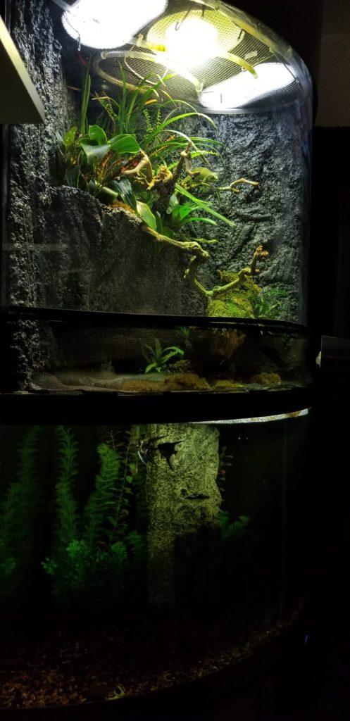 angel fish enjoying custom paludarium