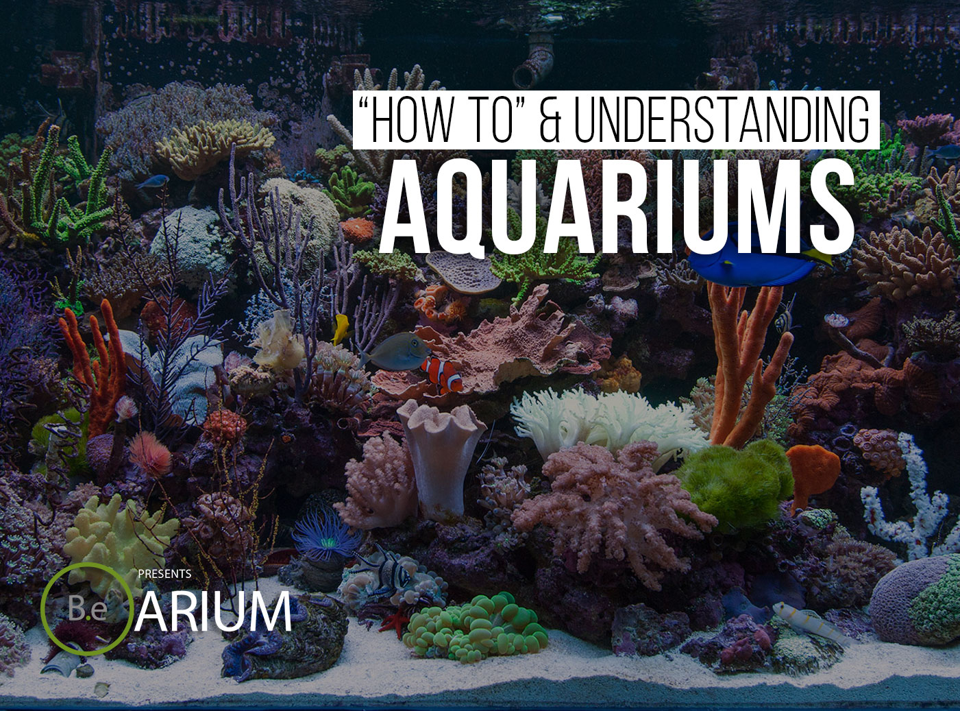 Aquariums Complete Guide
