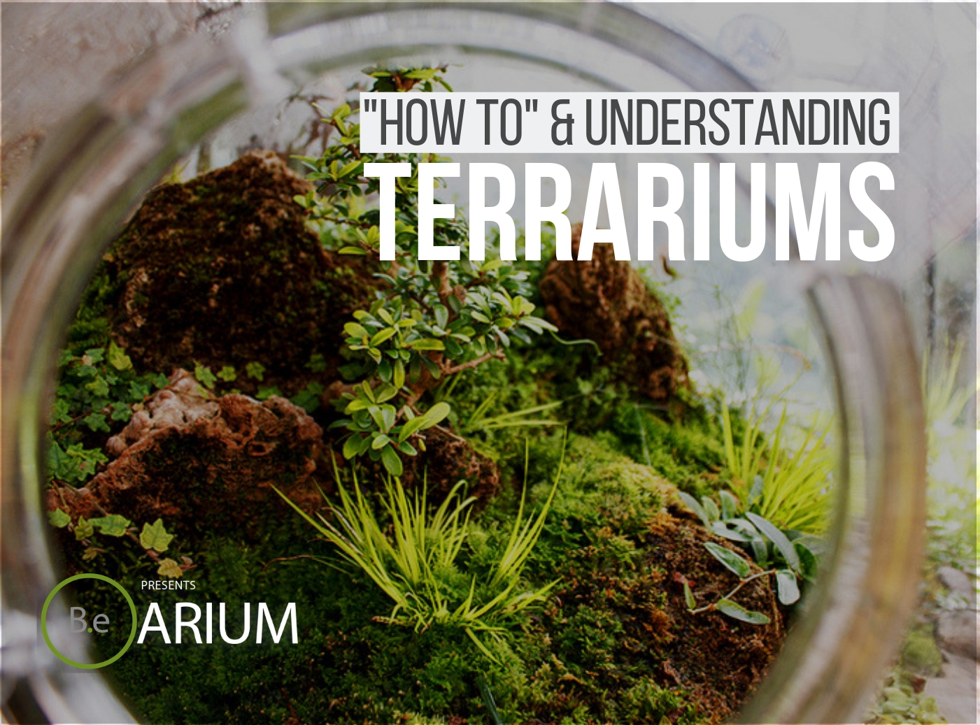 Terrariums Complete Guide