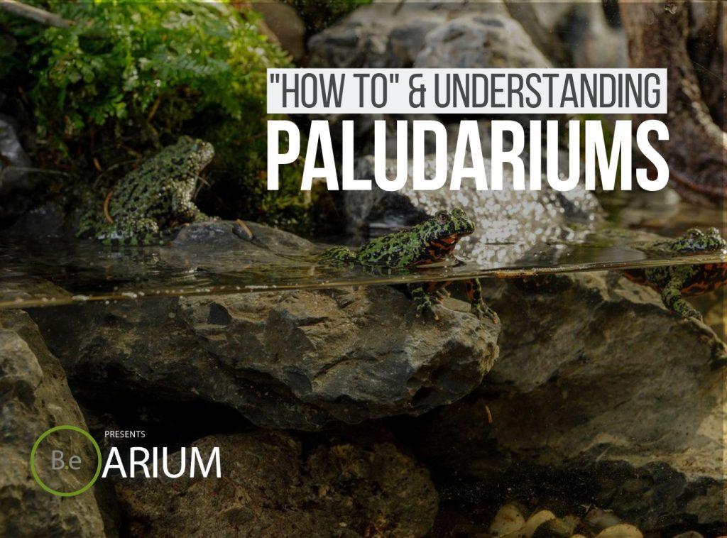 Paludarium Complete Guide