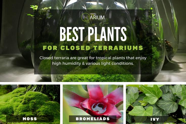 Best plants for closed terrariums