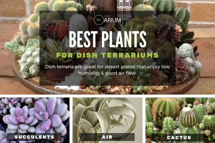 Best plants for dish terrariums