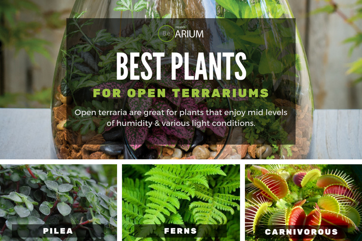 Best plants for open terrariums