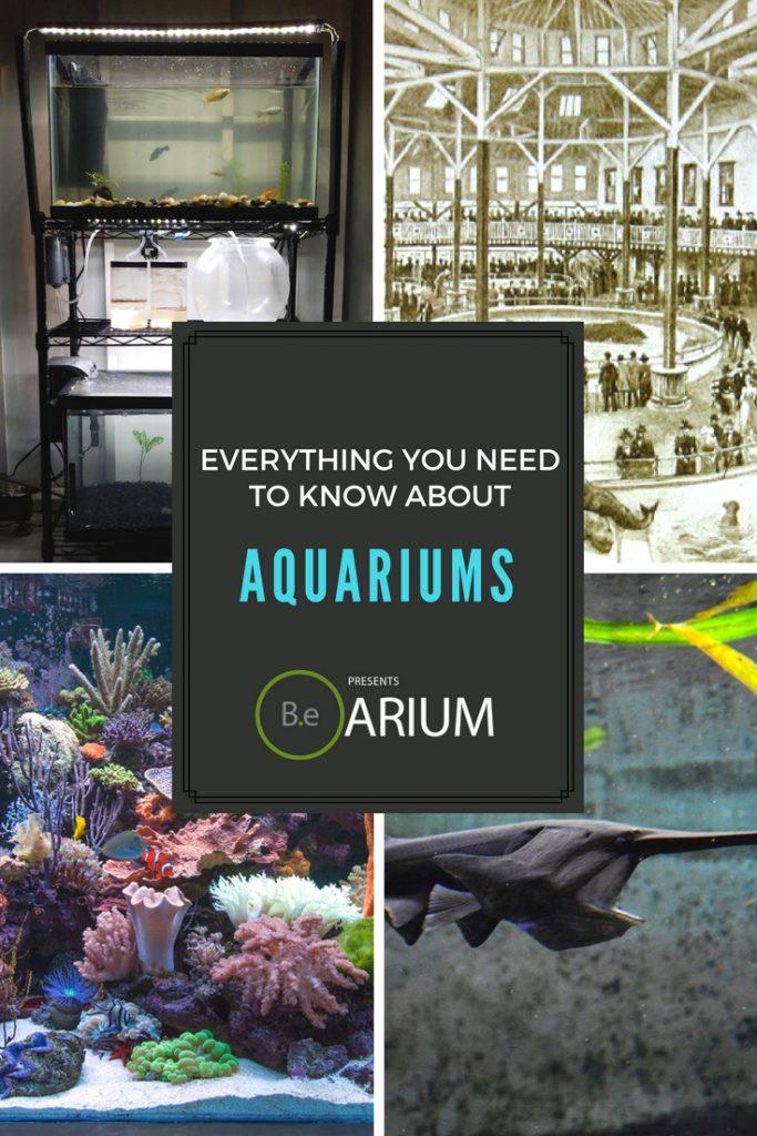 "Aquarium ""How To"" & Care Guide"
