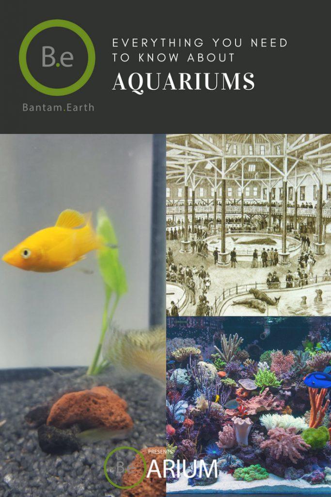 the ultimate aquarium guide