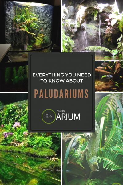 "Paludarium ""How To"" & Care Guide"