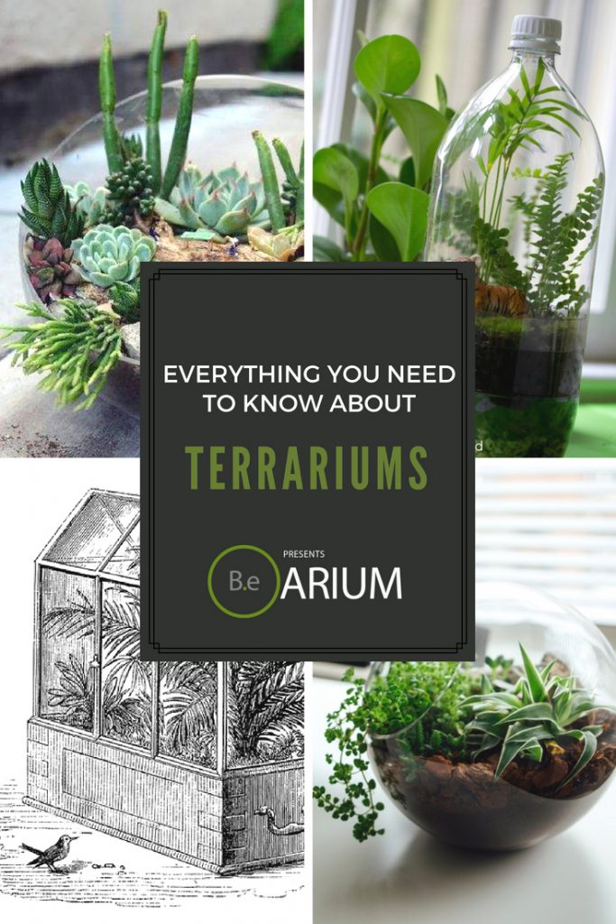 everything you need to know about terrariums