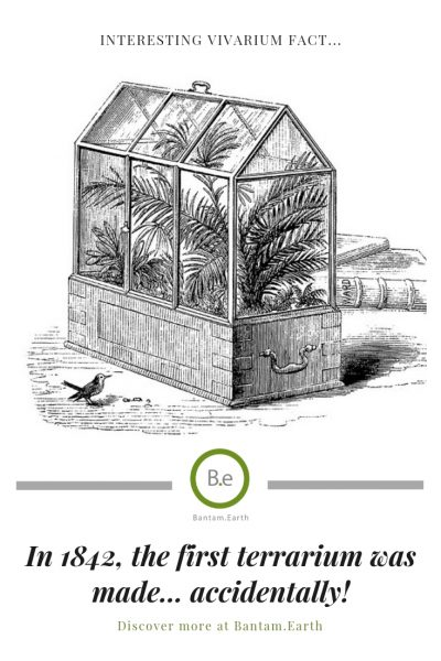 The First terrarium in history