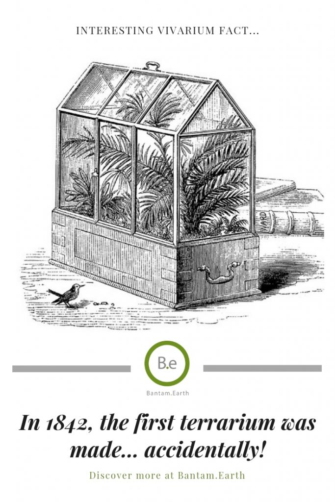 a sketch of the worlds first terrarium