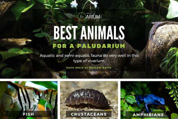 best paludarium animals