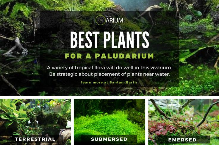 best paludarium plants