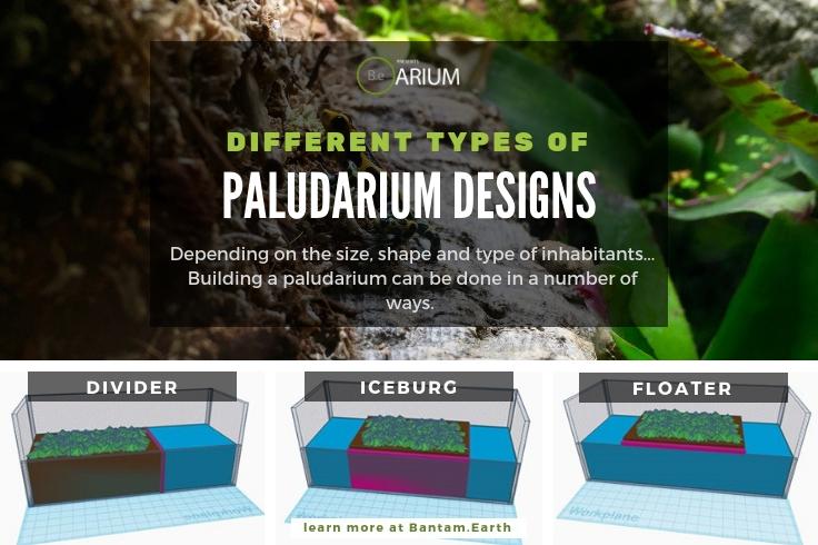 Designing A Paludarium