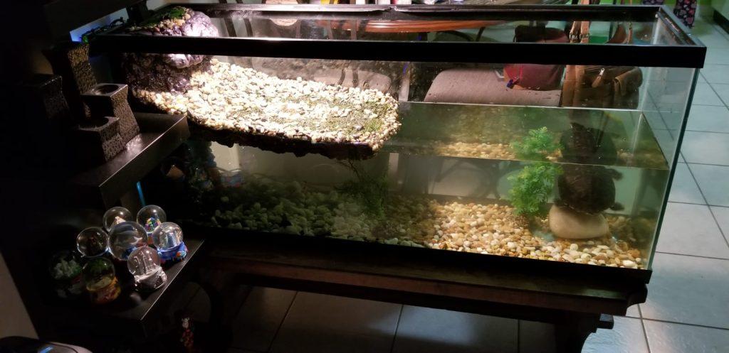 turtle paludarium