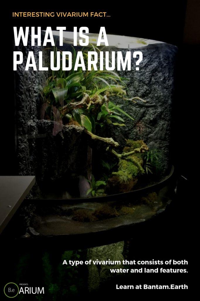 what is a paludarium?