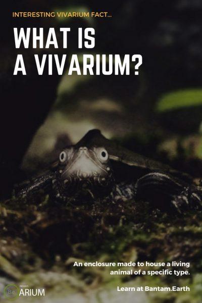 what is a vivarium?