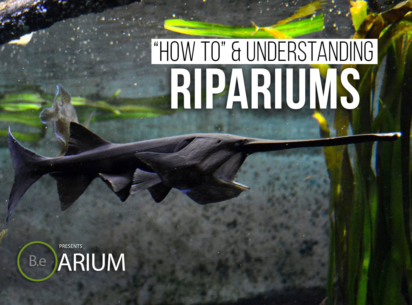Riparium Guide
