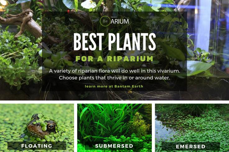 Best Plants For A Riparium