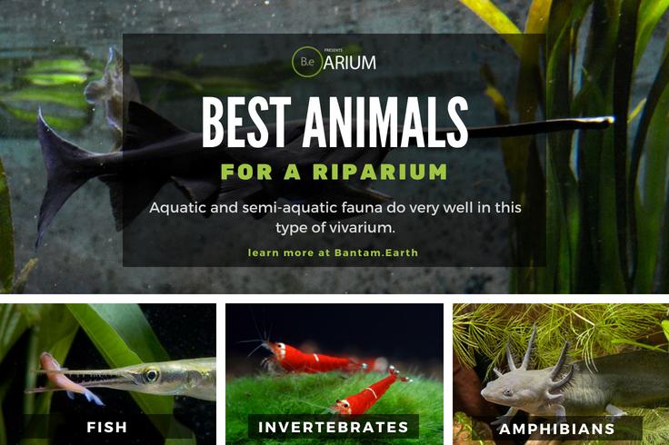 Best Animals For A Riparium