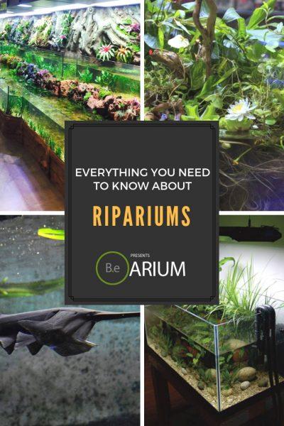 """Riparium """"How To"""" & Care Guide"""