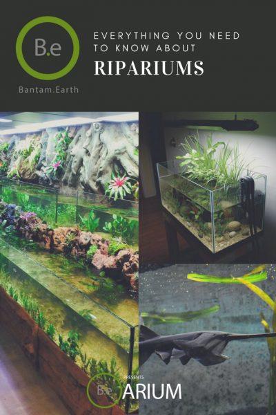 Riparium Care Guide For Plants & Animals