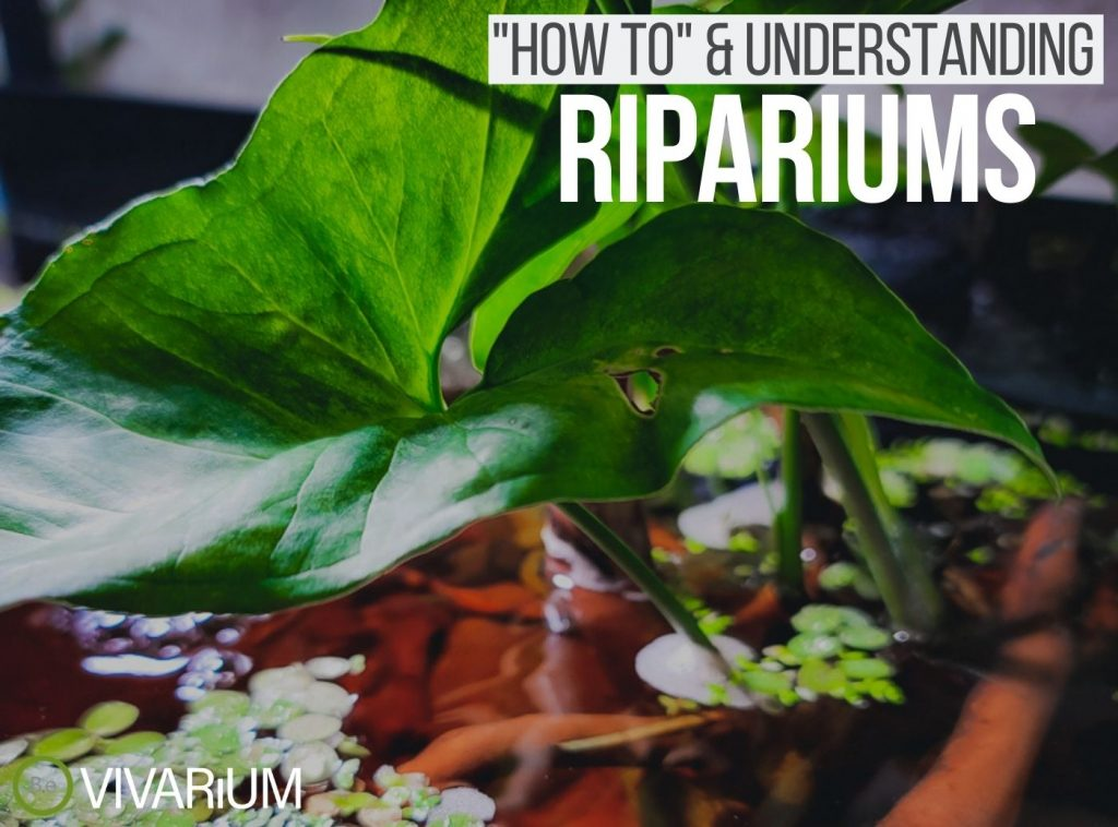 Ripariums Complete Guide