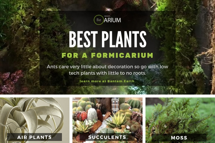 Best Plants For Formicariums (Ant Farms)