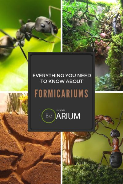 """Formicariums (Ant Farm) """"How To"""" & Care Guide"""