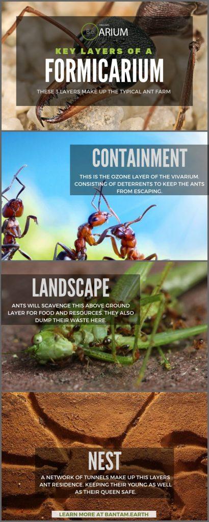 Building A Formicarium (Ant Farm)
