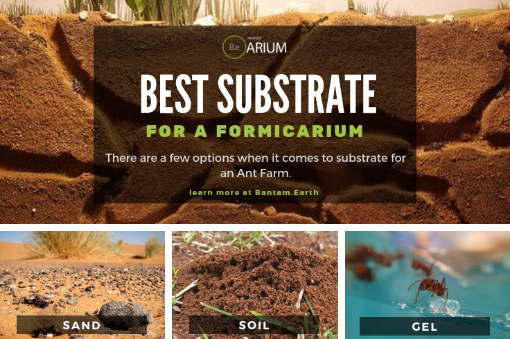 Best Substrates For Formicariums (Ant Farms)