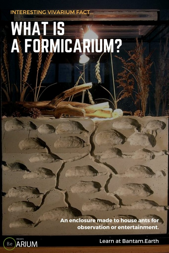 what is a formicarium (ant farm)?