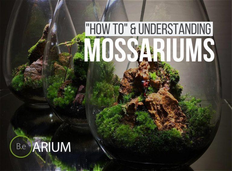 """Mossarium AKA Moss Terrarium """"How-To"""" & Care Guide"""