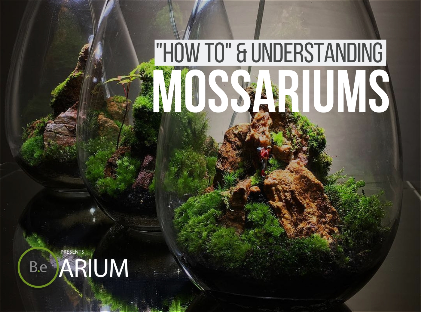 Mossarium Complete Care Guide How To Build Moss Terreriums