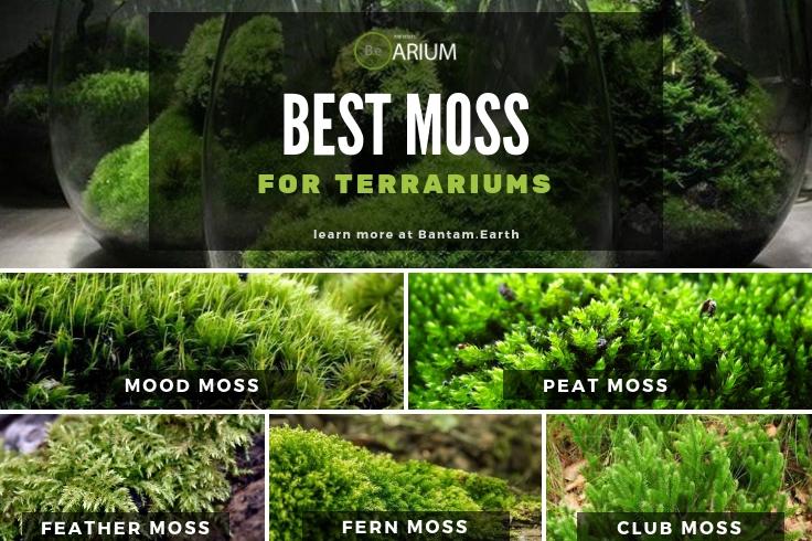 Best Moss For Terrariums