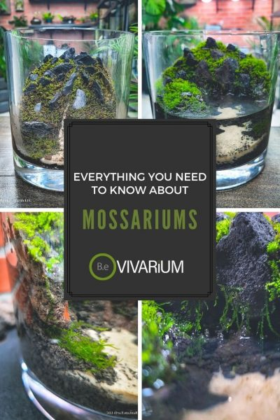"Mossariums ""How To"" and Care Guide"