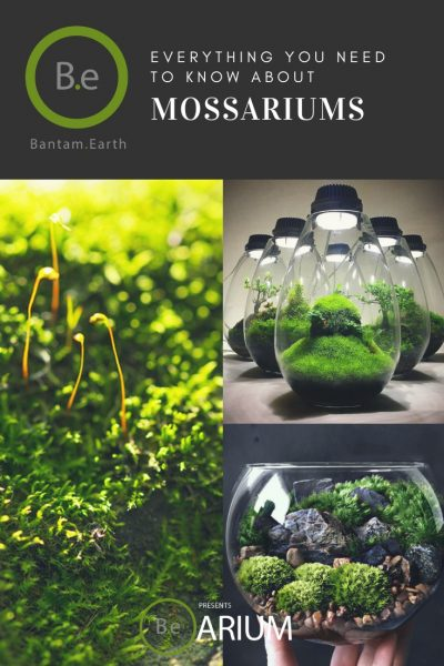 Moss Terrarium Care Guide