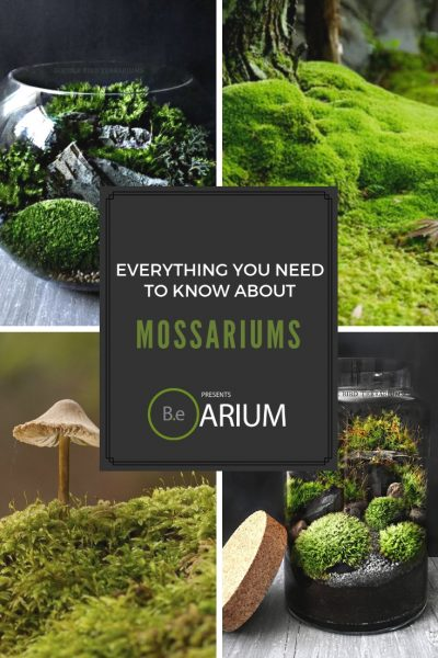 """Mossariums """"How To"""" and Care Guide"""
