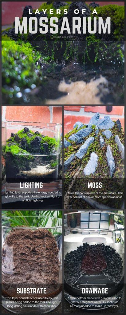 Moss Terrarium layers