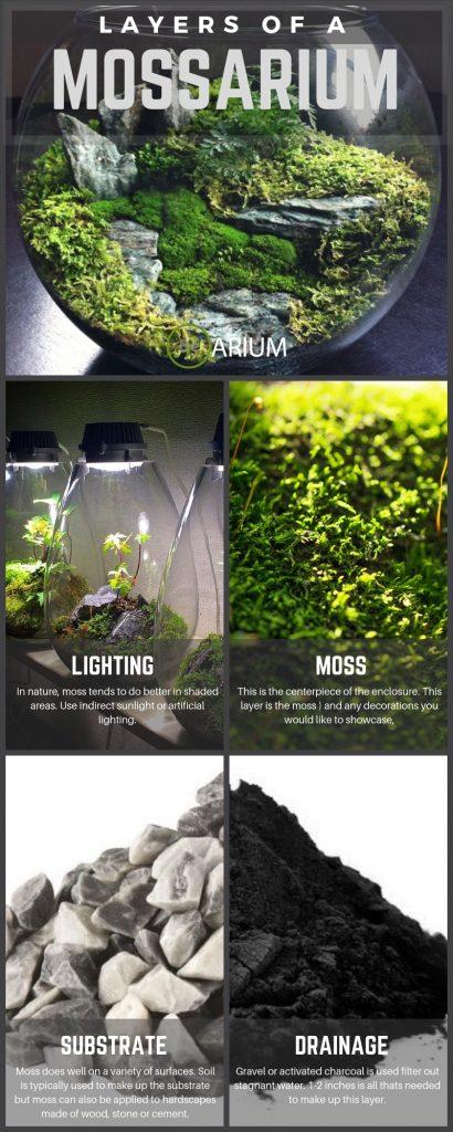 How To Build A Moss Terrarium